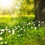 Trouver un fleuriste à Montpellier, critères de choix