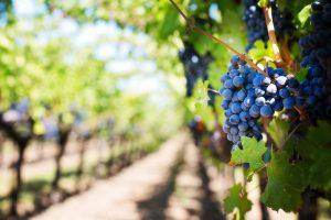 fusion acquisition viticole