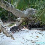 Mille et une raisons d'explorer le Parc national Manuel Antonio