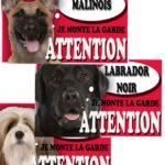 Acheter un animal de compagnie dans une animalerie: les règles à savoir