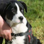 Les règles de bases essentielles pour réussir l'éducation de son chien